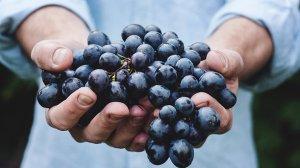 icampus-blog-fruit