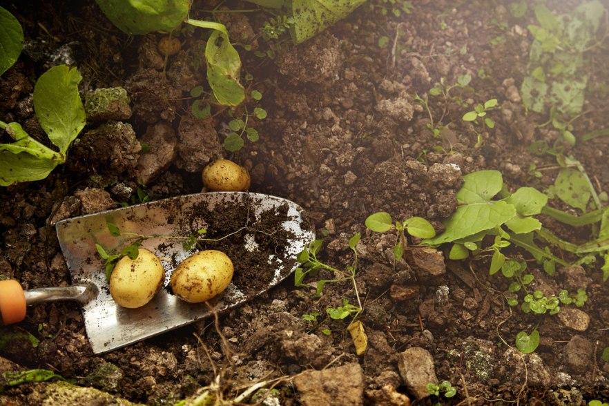 gardening-tip8